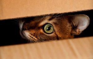 Почему кот прячется в темное место