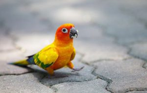 Чем болеют волнистые попугаи