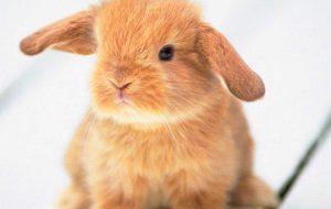 Может ли кролик стать другом человека?