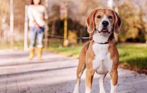 Как стать лидером для собаки?