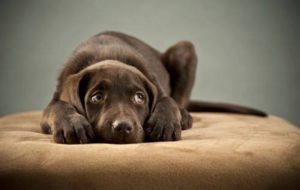 Воспитание собаки. Вопросы и ответы