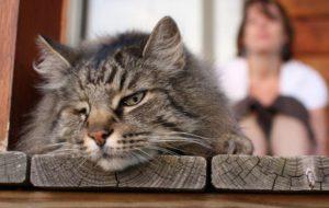 Учёные установили неожиданную пользу домашних животных