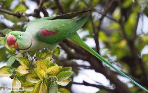 Врач-орнитолог — услуги по лечению птиц