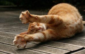 Почему кошки любят спать на людях