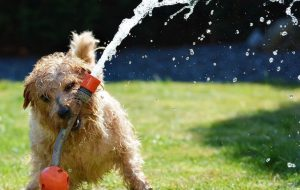Что делать, если собака много лает?