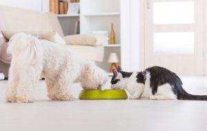 Можно ли давать кошачий корм собаке?