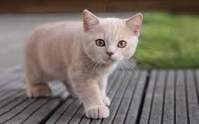 Агрессивность домашних кошек