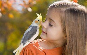 Питомец для ребенка: кого выбрать?