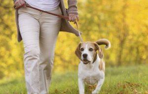 Жизнь вместе с собакой меняет организм человека