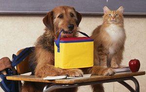 Лучший друг человека — собака или кошка?