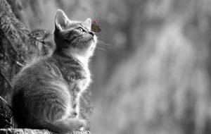 Ученые и медики заверяют: кошки способны оградить от болезней