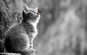 Советы для тех, кто решил завести котенка