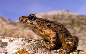 Интересно о лягушках