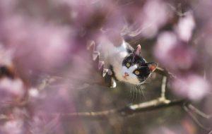 Как мумиё может помочь в лечении кошек?
