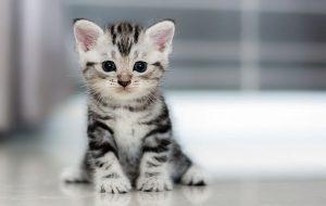 Болезни, которые способна вылечить кошка