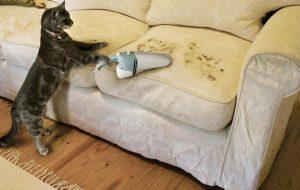 Линька у кошек