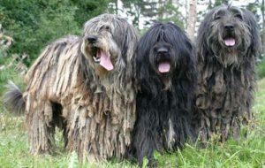 Бешенство у собак: как определить болезнь у животного?