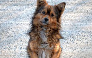 Дворняжка: да, это именно она — собака без породы