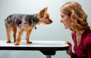 Как приручить собаку, взрослую или щенка, с улицы, из питомника, от другого хозяина