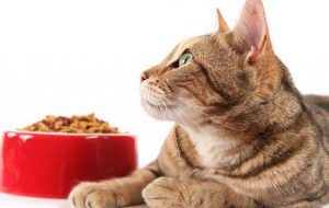 Полнорационный сухой корм для стерилизованных и кошек с избыточным весом на основе мяса утки