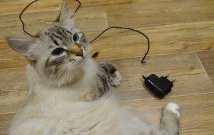 Что делать, чтобы кот не грыз провода?