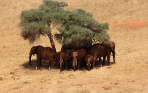 Самые дорогие породы лошадей в мире