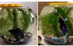 Какую аквариумную рыбку купить?