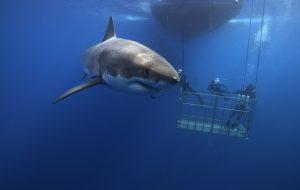 Где на планете больше всего акул?