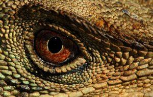 Стоит ли заводить рептилию дома