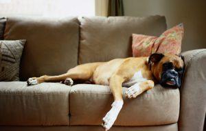 Как видит мир собака — и что значат собачьи поцелуи