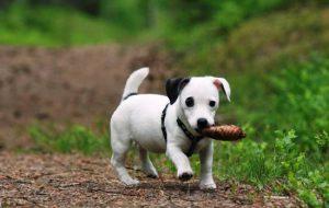 Как научить маленького щенка командам