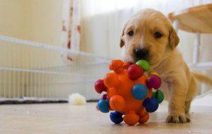 Что нужно сделать для щенка перед его появлением в доме