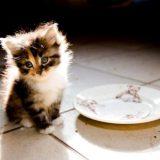 Чем кормить котенка в 4 месяца?