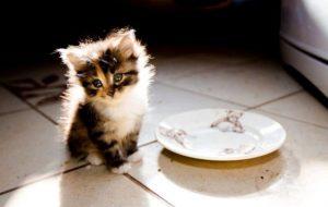 Правильно ли вы кормите свое домашнее животное?