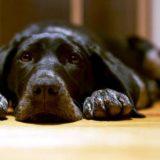 Панкреатит у собак: причины, клиническая картина и лечение