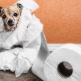 Домашние животные и вопросы гигиены