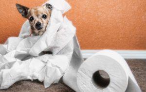 Понос у собаки, что делать, если у собаки жидкий стул