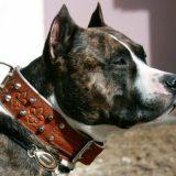 Ошейник для собаки: чем отличаются ошейники для разных пород собак