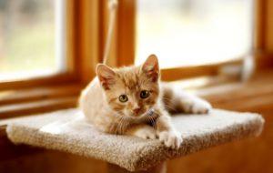 Как кошка договаривается с домовым и каких котят лучше дарить на свадьбу?