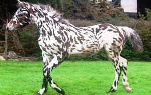 Какая порода лошадей самая редкая?