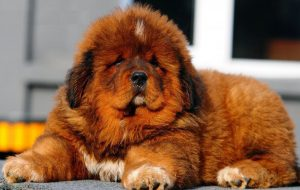 Какая бывает грыжа у собаки?