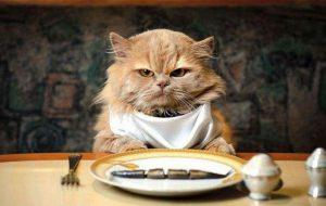 Культура питания кошек — основные принципы