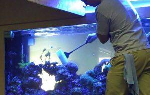Правила обслуживания аквариумов
