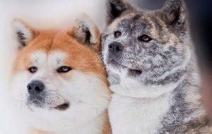 Выбираем собаку: что надо знать?