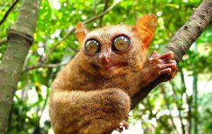 Какое самое необычное млекопитающее?