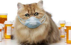 Насморк у котенка: первая помощь, чем лечить, нужно ли везти к ветеринару