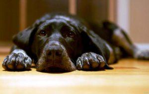 Панкреатит у собак: причины, клиническая картина и лечение.