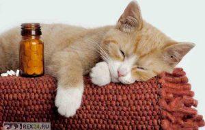 Чем осенью может заболеть кошка