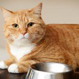 Как отучить кота от сухого корма?