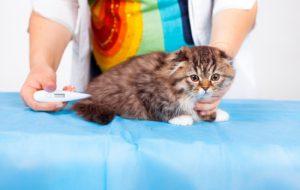 Какая нормальная температура у кошек и как ее измерить?